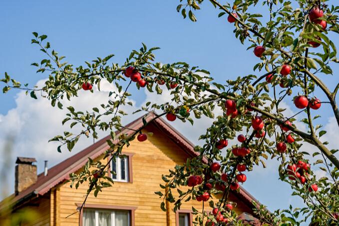 maison avec pommier