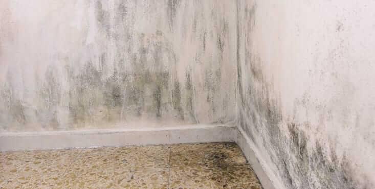 House mold