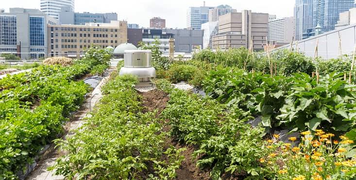 jardin de toit