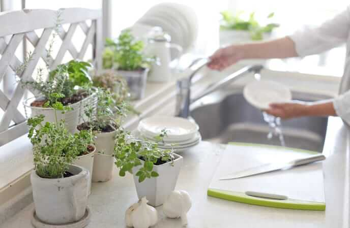 jardin de fines herbes dans la cuisine