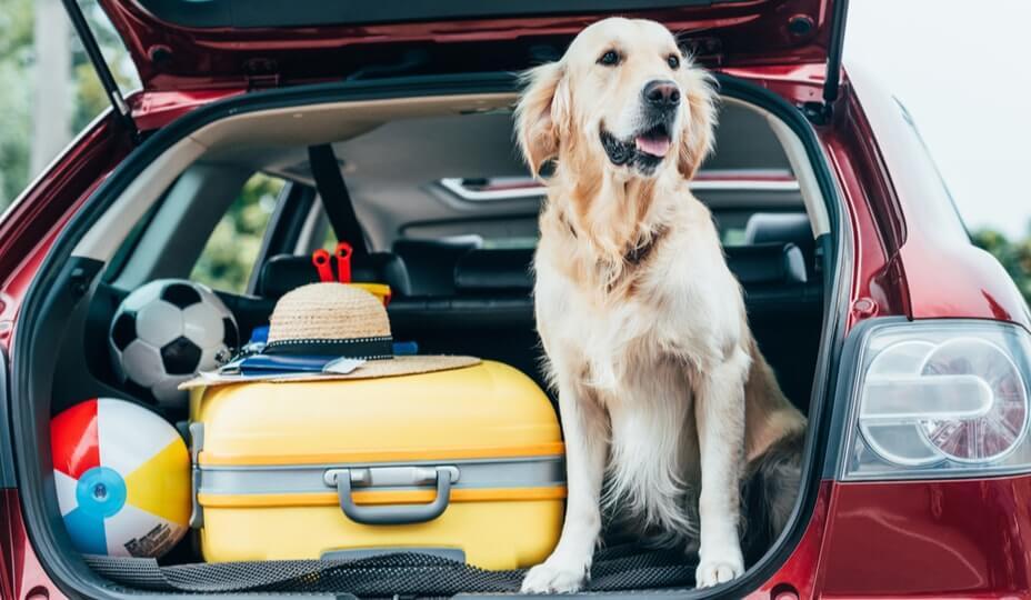 coffre de voiture ouvert avec chien golden retriver et valises