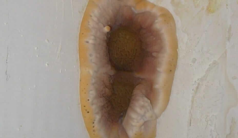 décontamination serpula lacrymans