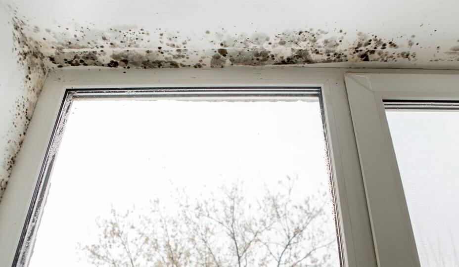 moisissure_bord_fenêtre