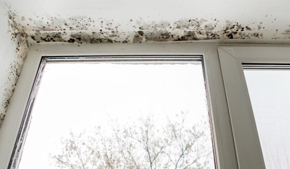 window_wtih_mold