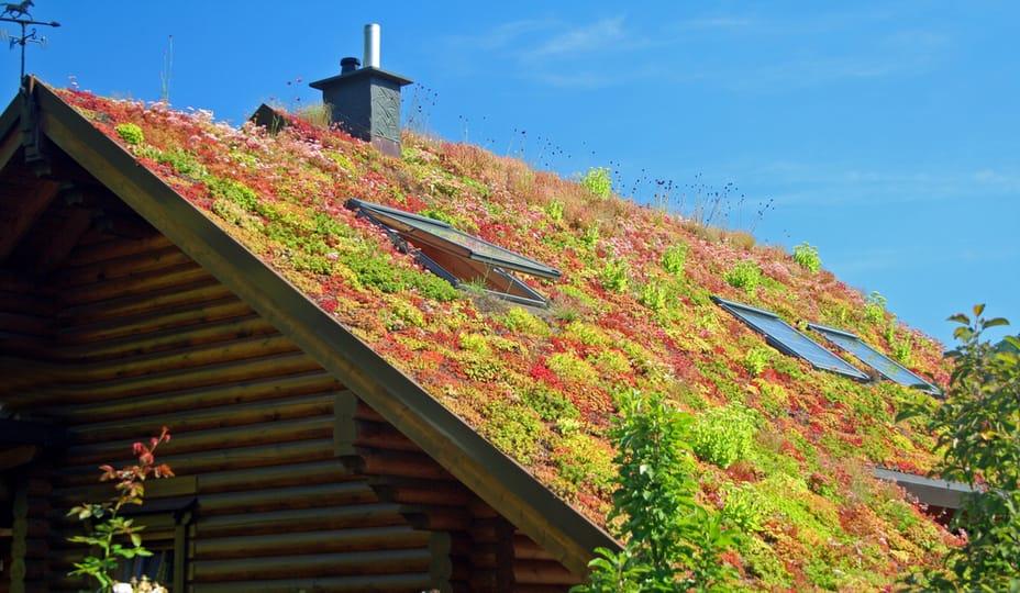 toit vert avec plantes sur une maison