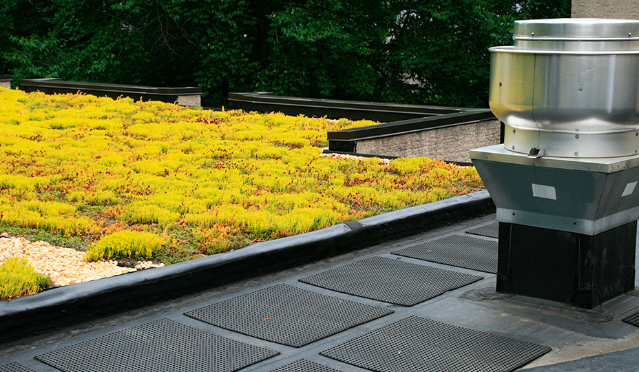 green roof next to ventilation