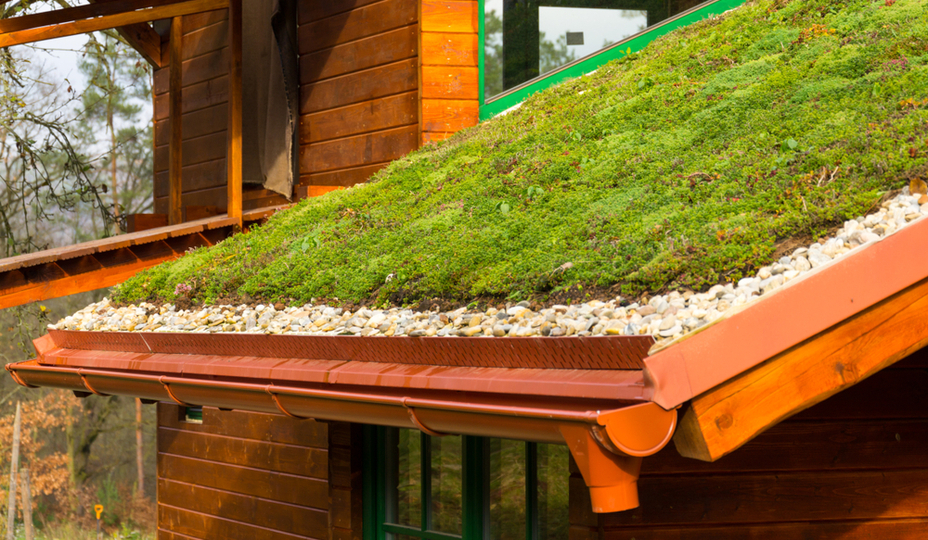 wood house with green roof