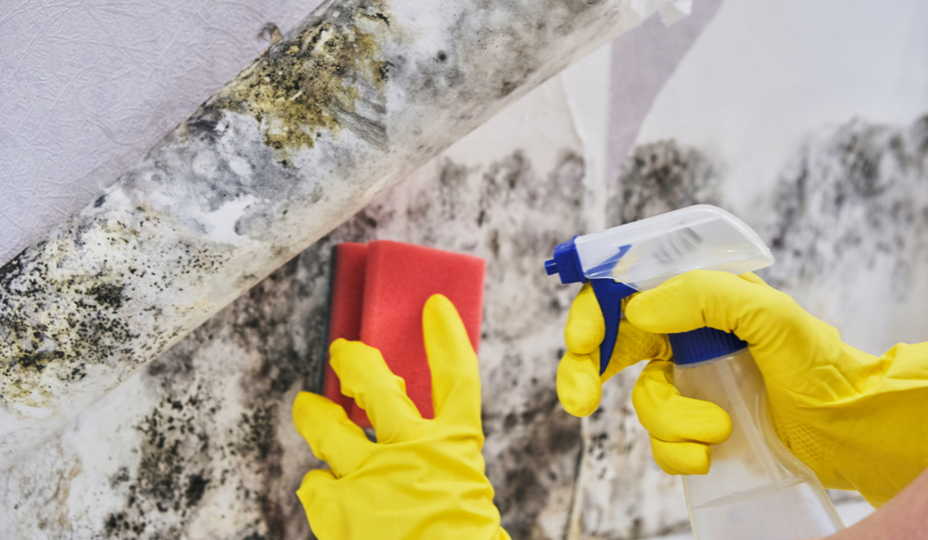personne qui enlève de la moisissure elle-même avec éponge rouge, gants jaunes et vaporisateur